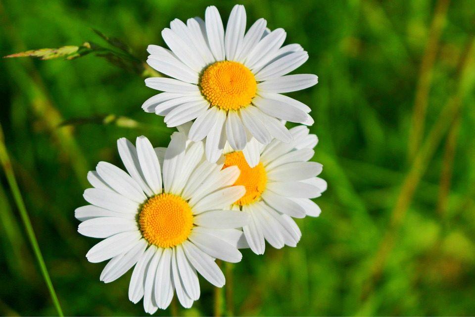 A-Beleza-das-Flores-4